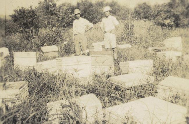 長坂養蜂場の歴史