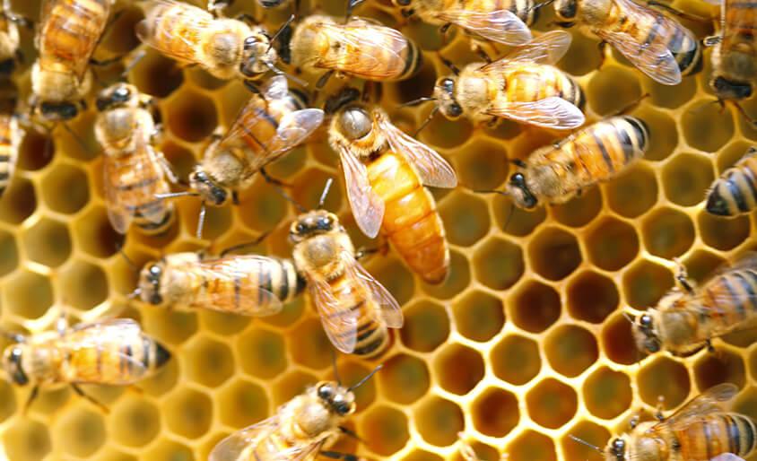 ローヤルゼリーと女王蜂の秘密