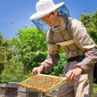 国産三ヶ日みかん蜂蜜 450gボトルタイプ