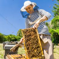 国産三ヶ日の里山蜂蜜 200g