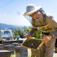 国産三ヶ日の里山蜂蜜 850g